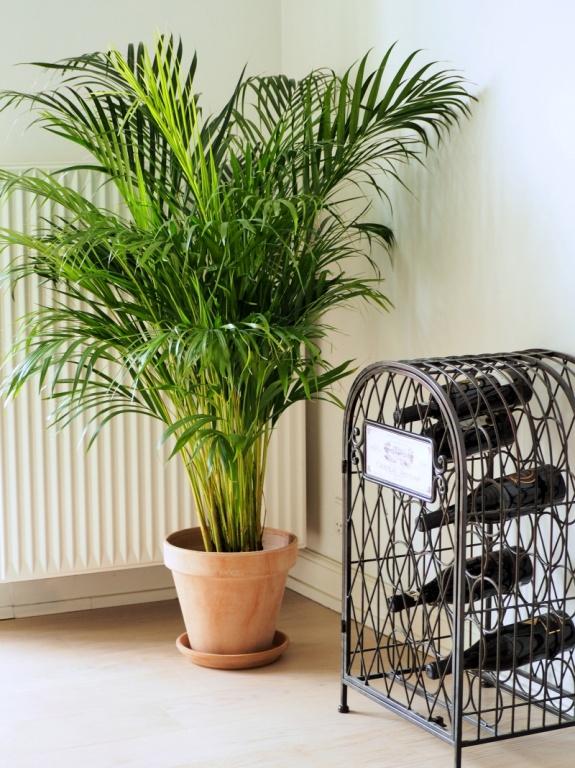 Légtisztító növények- a kellemes otthon titkai
