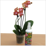 Compo Orchidea Spray