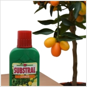 Substral Citrus tápoldat